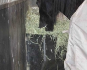 Horse eating hay from hay feeder