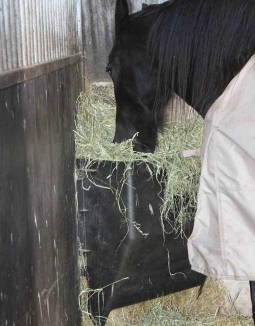 Horse eating hay from hay feeder
