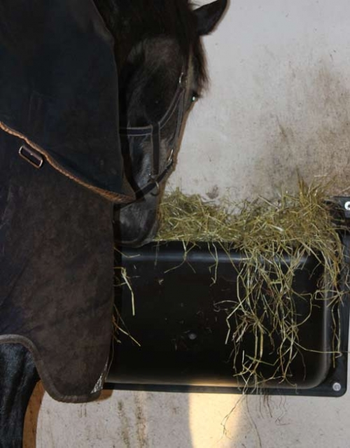 Horse eating hay from a feeder