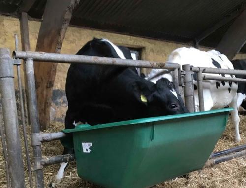 Milchproduzent legt Wert auf Flexibilität und leichte Handhabung beim Gross-Futtertrog Nr. 1800
