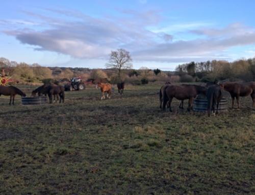 Hestehold i løsdrift